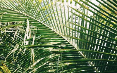 April 5, 2020 Service: Palm Sunday